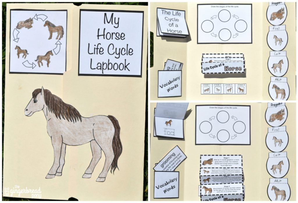 Horse Life Cycle Lapbook Collage
