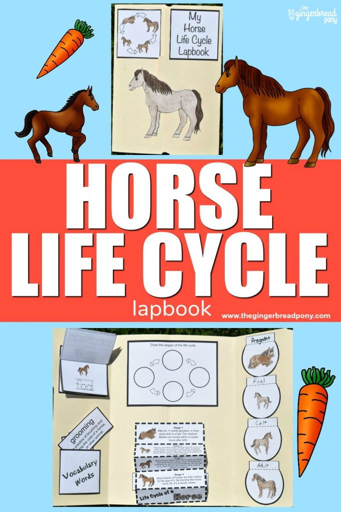 Horses Life Cycle Craft PIN