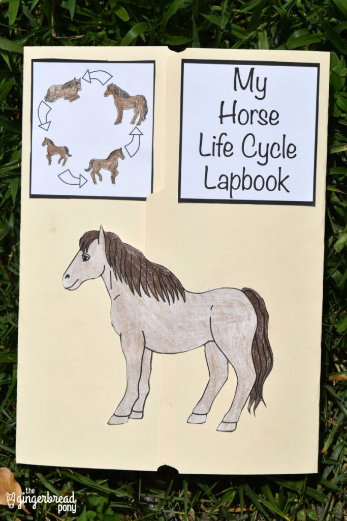 horse life cycle lapbook vertical